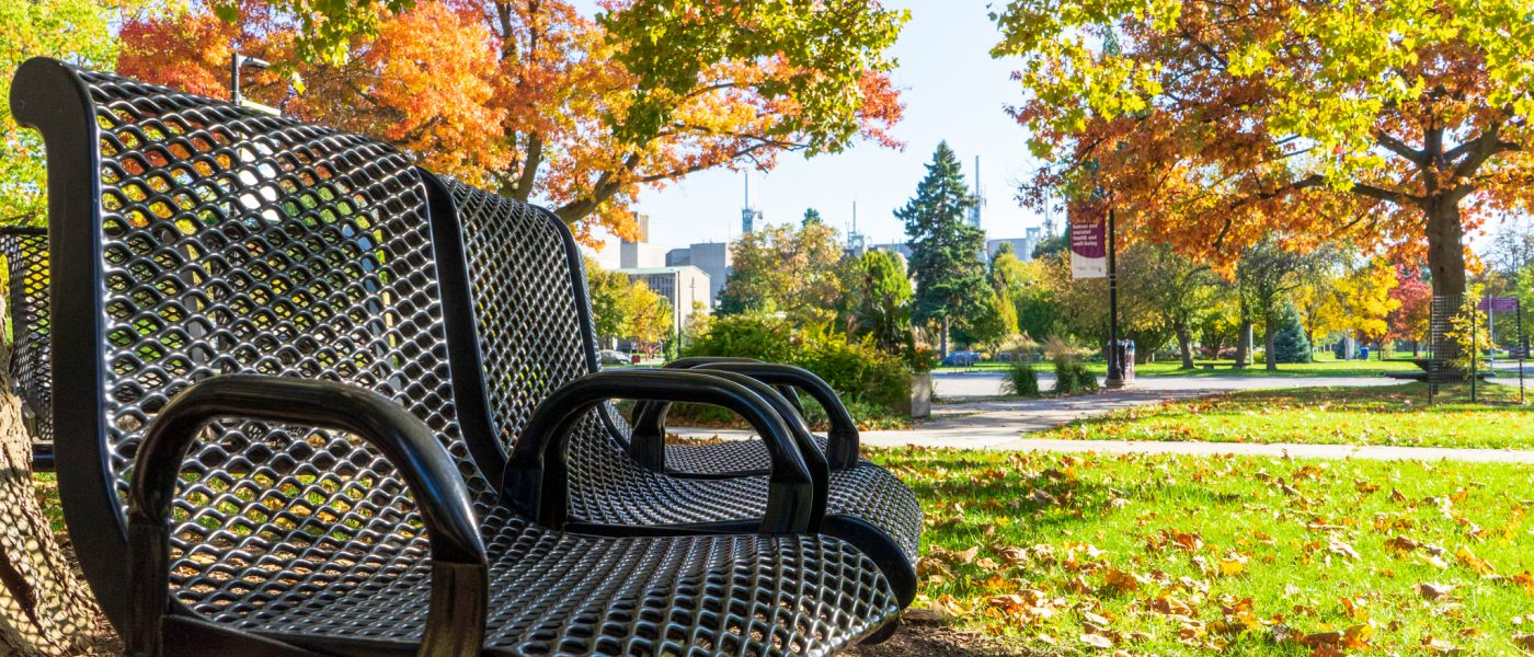 Bench on campus during fall with coloured leaves